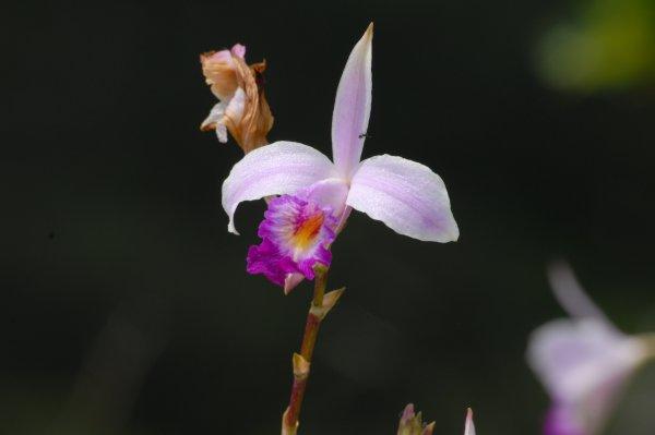 nariyaran